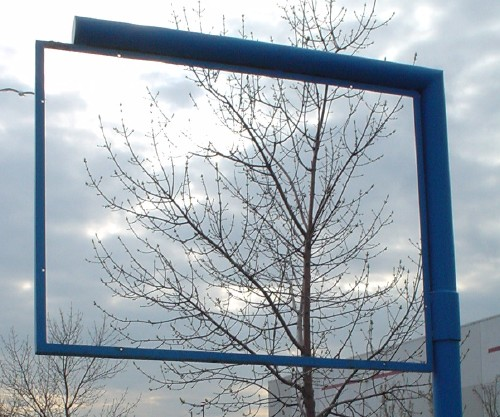 Outdoors, an empty blue sign on a pole frames a tree behind it