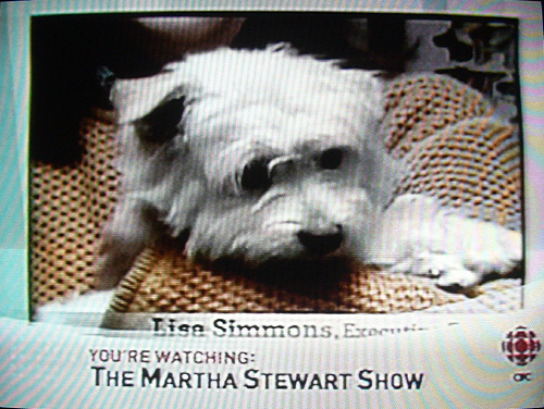 Chyron at screen bottom reads You're watching: The Martha Stewart Show on top of another Chyron from the show. Small white dog in main picture