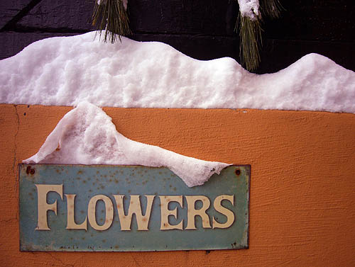 Snow piles up on a sign on a wall reading FLOWERS in small caps