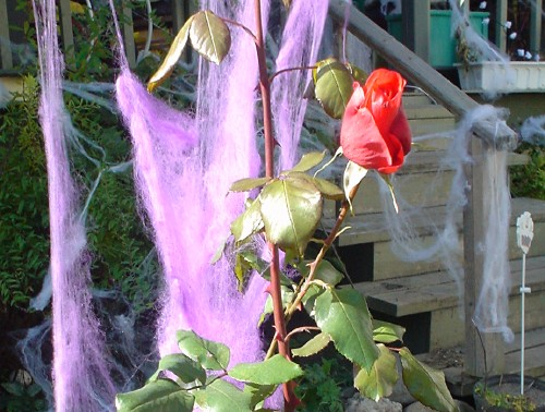 Plant stalk ends in leaves and a red rose and sits before some tendrils of fine lavender-coloured string netting