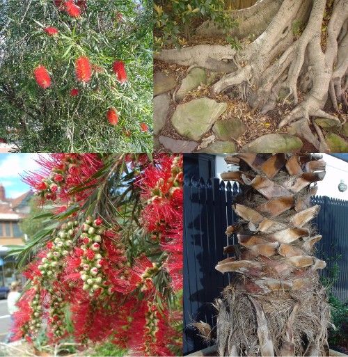 Two plants with brilliant-red spiky flowers; roots of a tree in earth dotted with flat rocks; tree with bark spikes extending out from the trunk at intervals