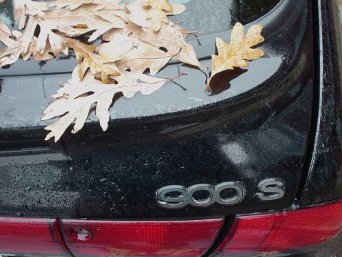 Damp fallen maple leaves cluster at rear spoiler of Saab 900S