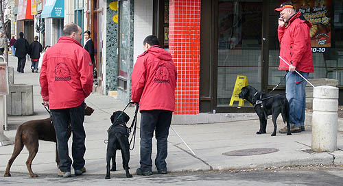 Three guys in red jackets, two facing away from us, one making a cellphone call. Two of the men hold white canes, and each has a guide dog, two black in colour and one brown