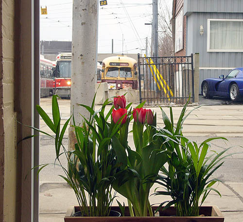Potted tulips sit behind a picture window looking out on a Prowler and a streetcar yard