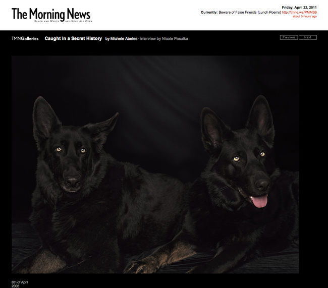 Screenshot from the Morning News shows two black dogs with glowing eyes