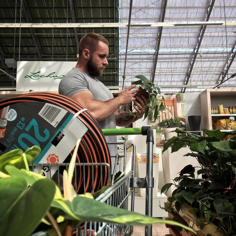 Well-muscled bearded man in greenhouse inspects a philodendron